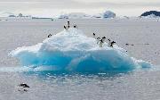 Blåt isbjerg og pingviner - her adeliepingviner