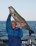Stor sej (mørksej) på 13.8 kg fanget af Allan Hansen