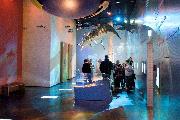 3D film på Geocenter Møns Klint museum.