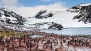 Pingvin koloni på Sydorkneyøerne