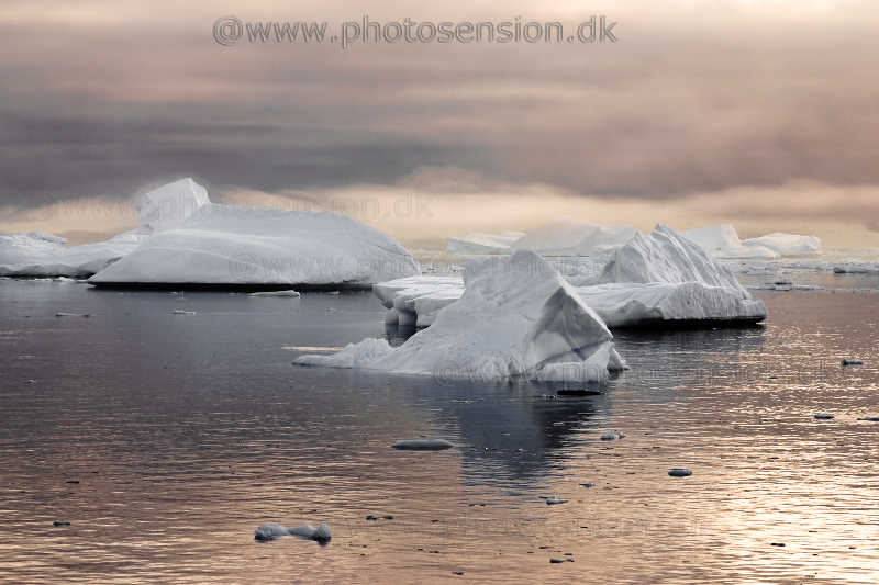 Isbjerge ved Antarktis i morgenlys.